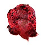 American Feathers #1 Quality Ringneck Pheasant Skin - Product of The U.S.A. (Red) (Color: Red)