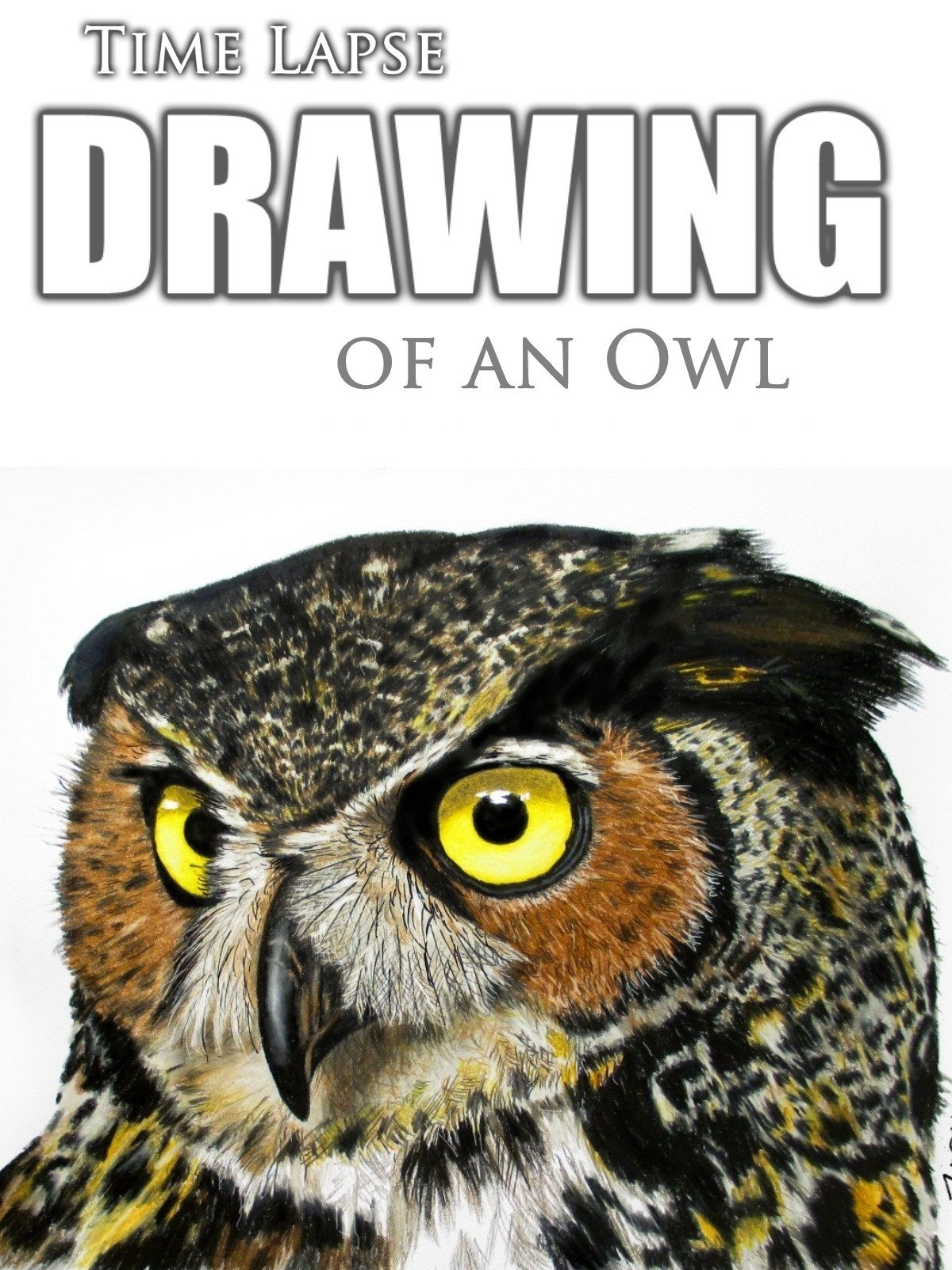 Clip: Time Lapse Drawing of an Owl