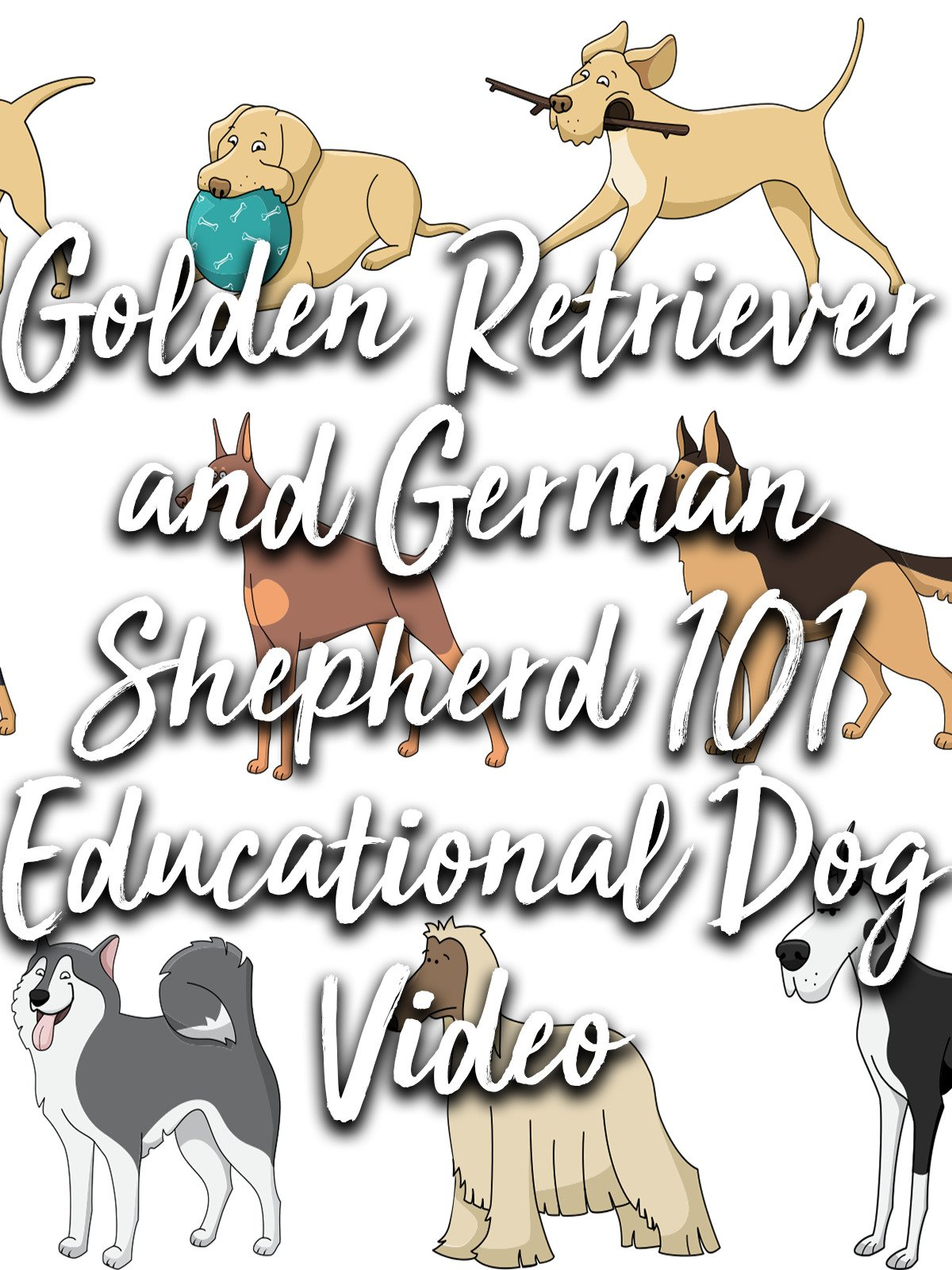 Golden Retriever and German Shepherd 101 Educational Dog Video