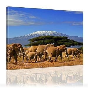 Bilderdepot24 Leinwandbild Elefanten am Kilimandscharo ( Afrika ) 120x90cm  fertig gerahmt, direkt vom Hersteller    Kundenbewertung und Beschreibung