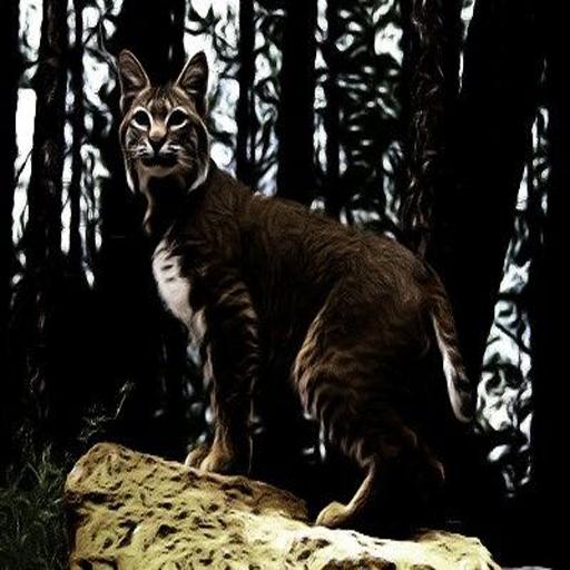bobcat-sounds
