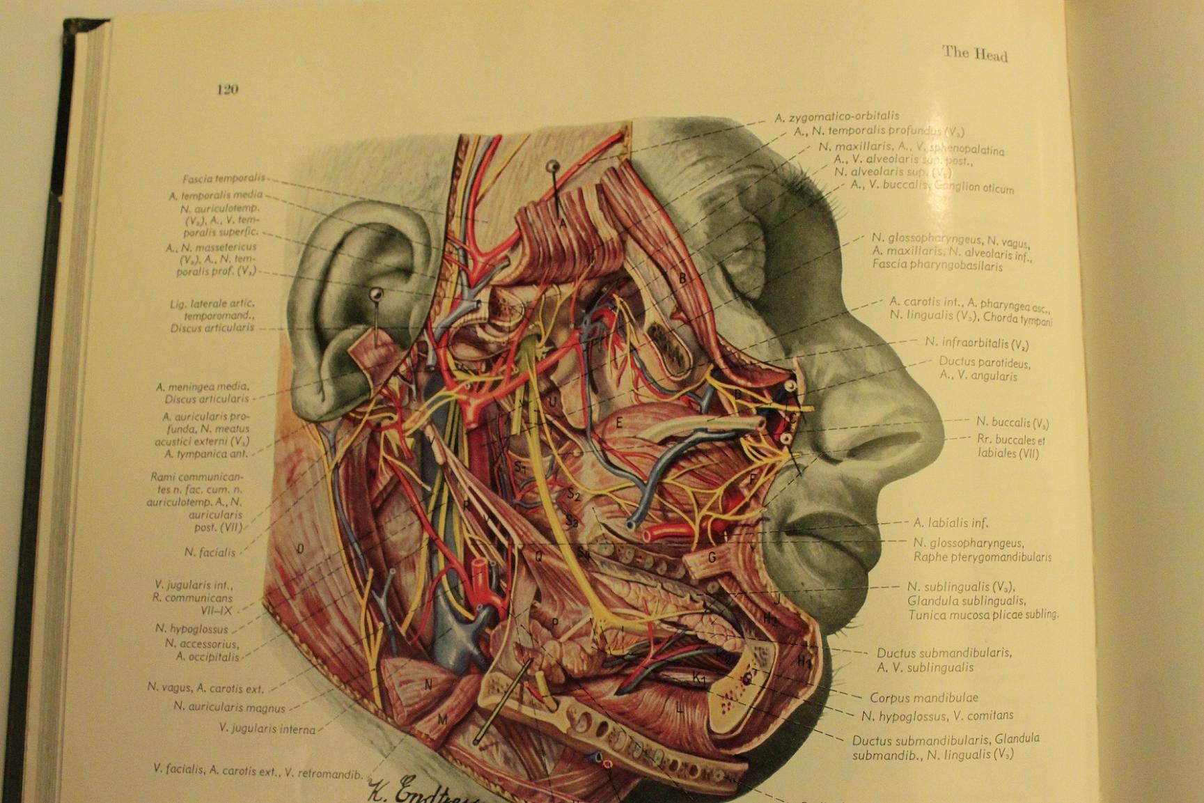 Human anatomy history
