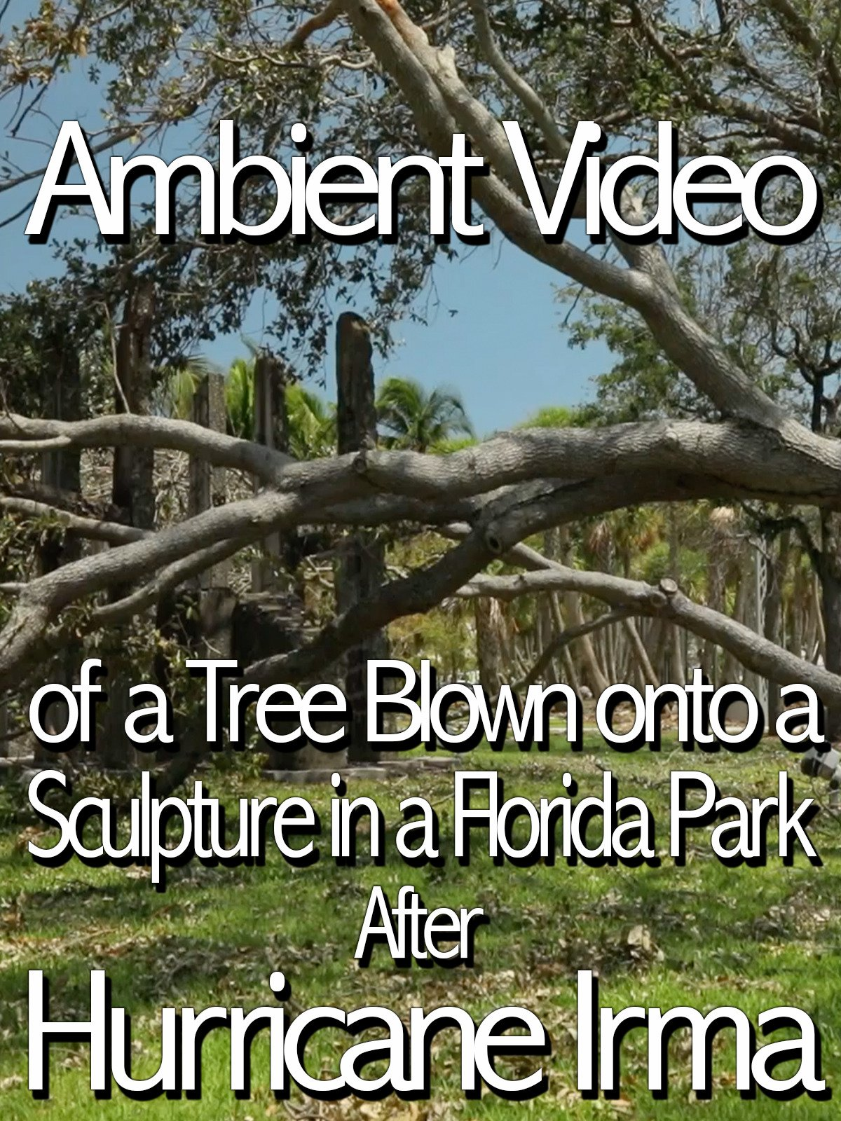 Ambient Video of a Tree Blown onto a Sculpture in a Florida Park After Hurricane Irma