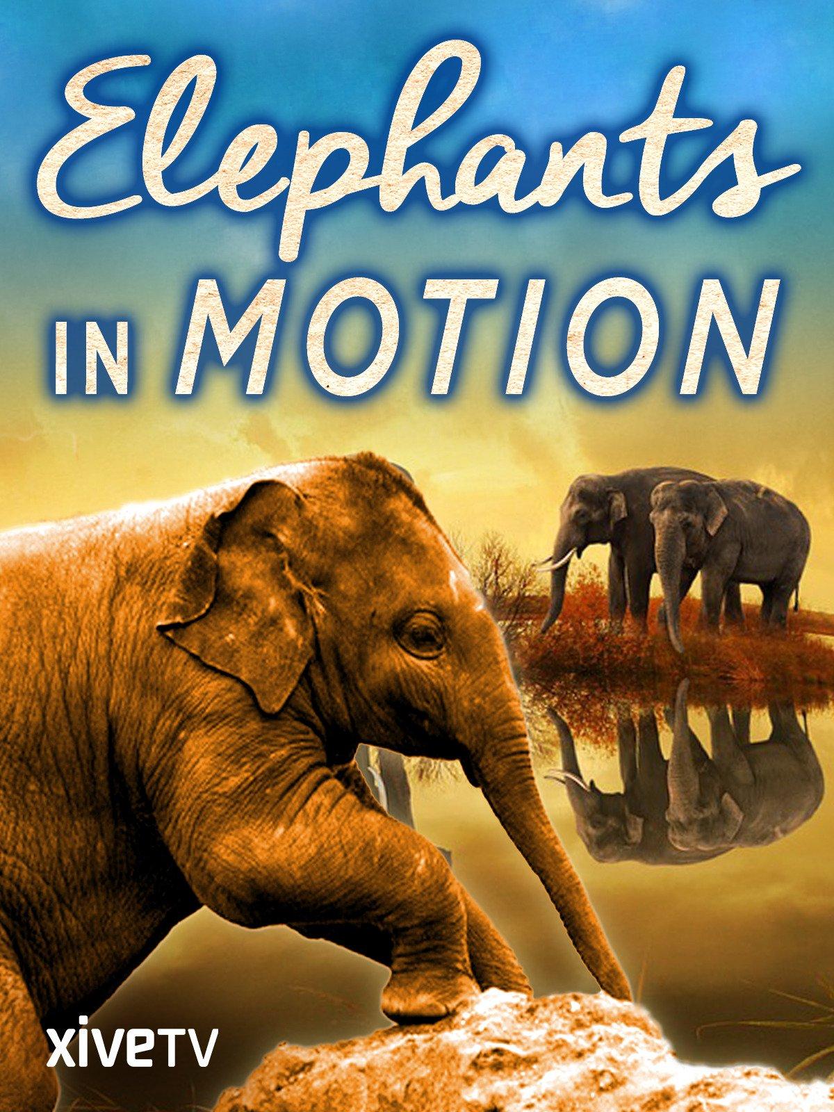 Elephants in Motion