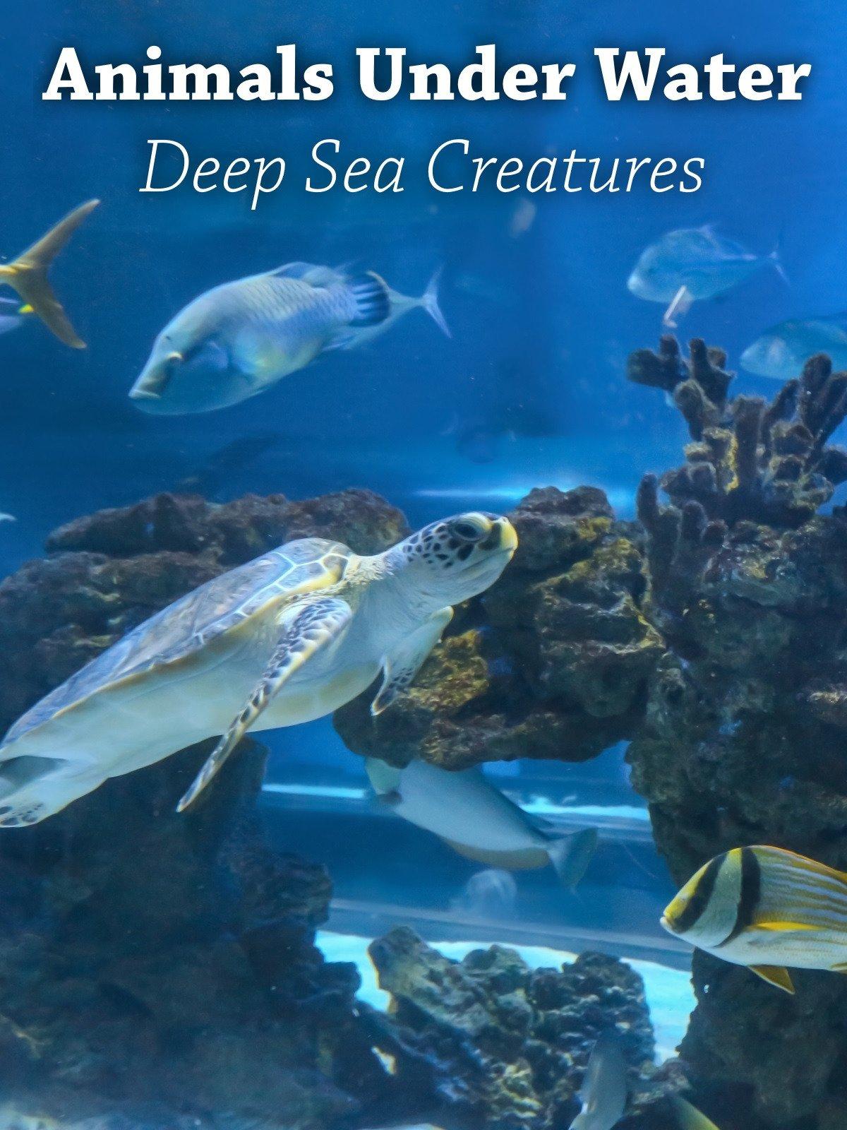Animals under Water