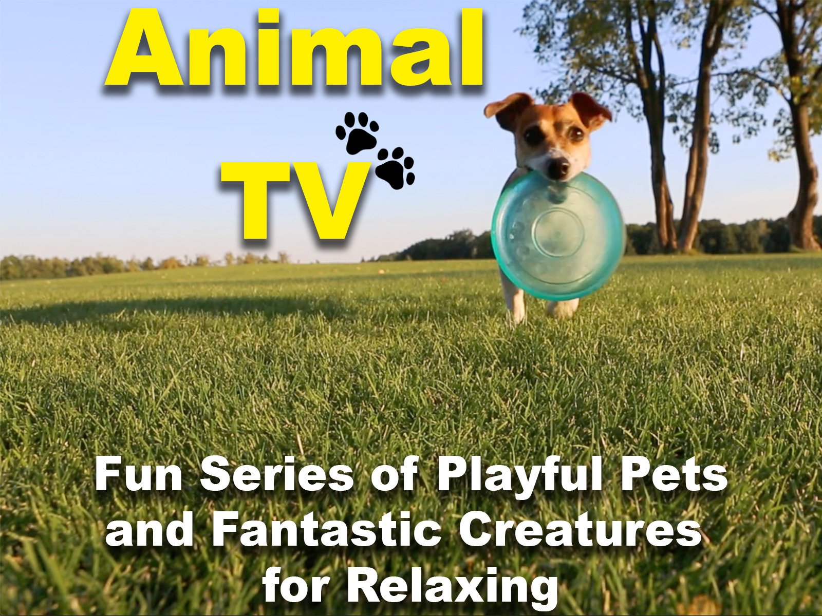 Animal TV Fun Series of Playful Pets and Fantastic Creatures for Relaxing - Season 1