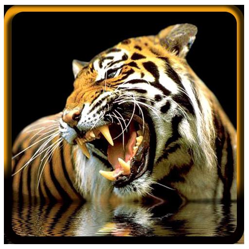 tigre-fonds-decran