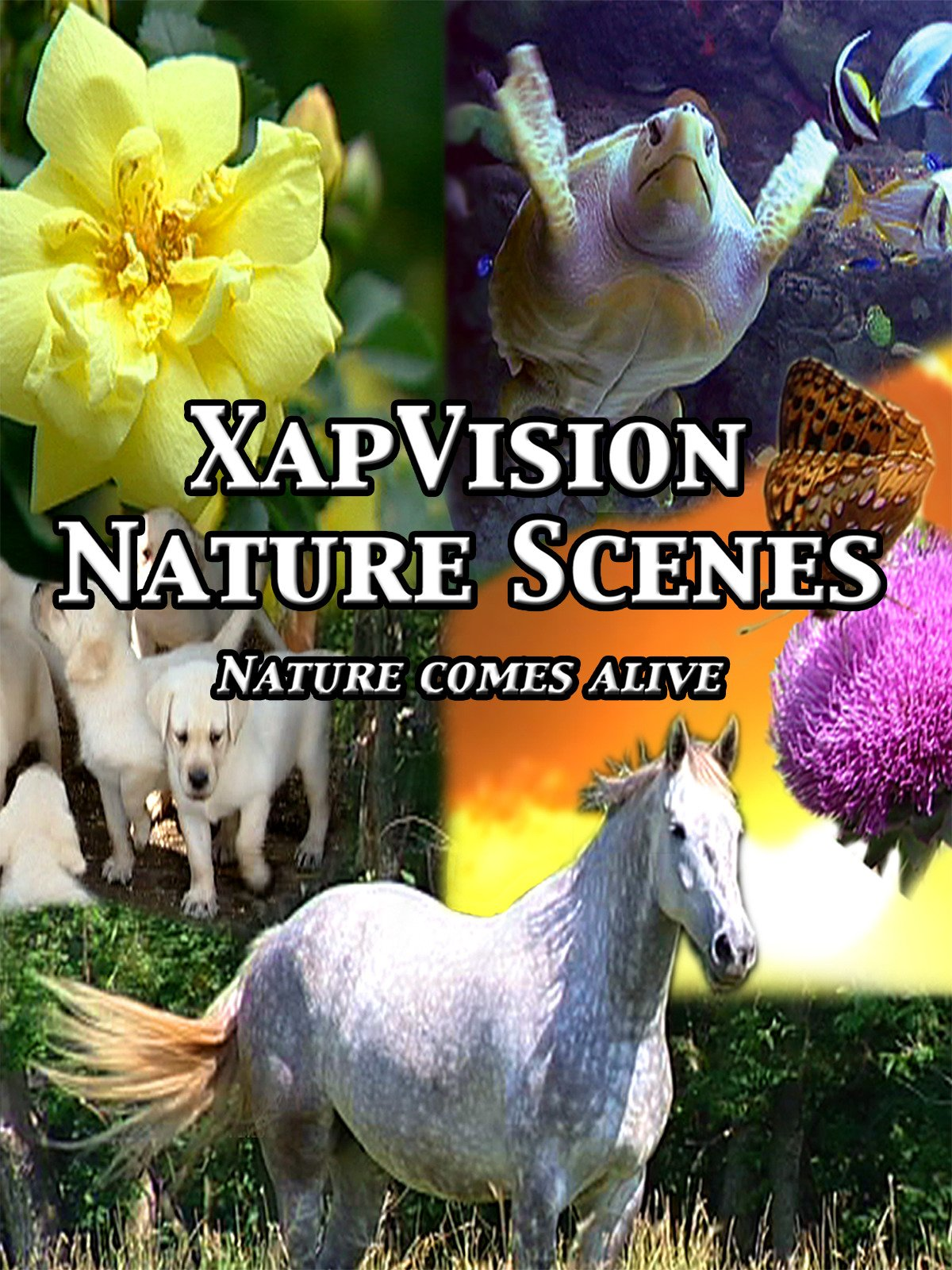 XapVision Nature Scenes