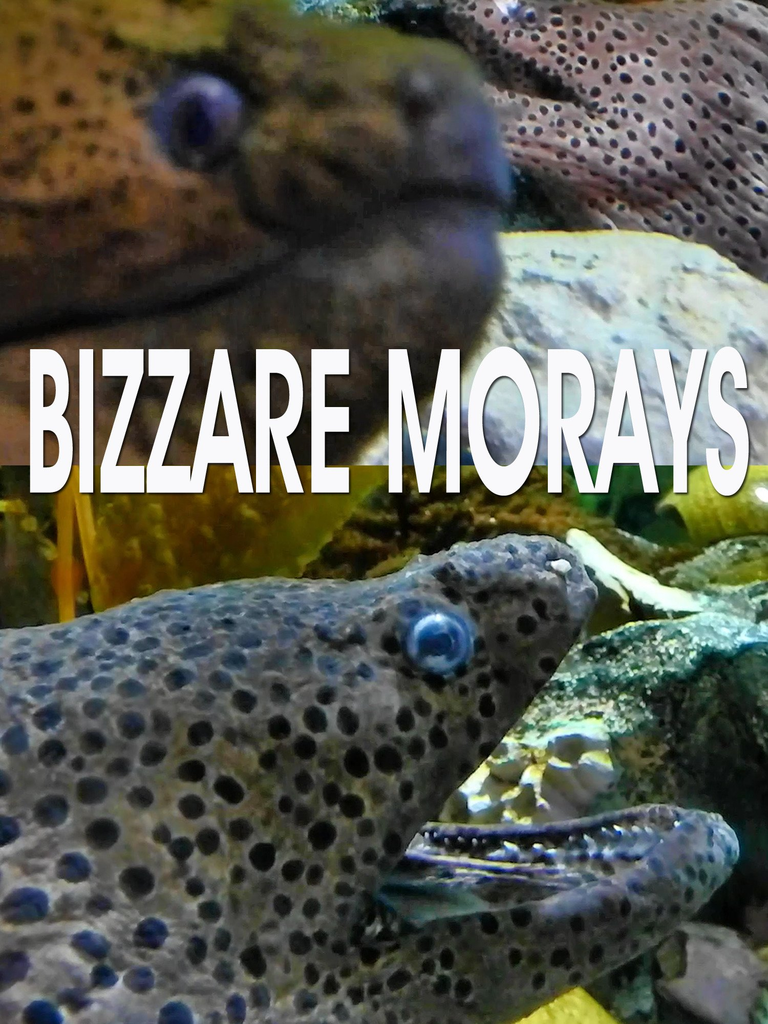 Bizzare morays