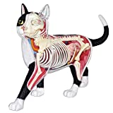 4D Master Vision Cat Skeleton & Anatomy Model Kit