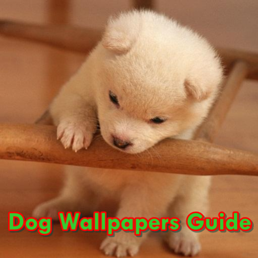 Dog Wallpapers Guide