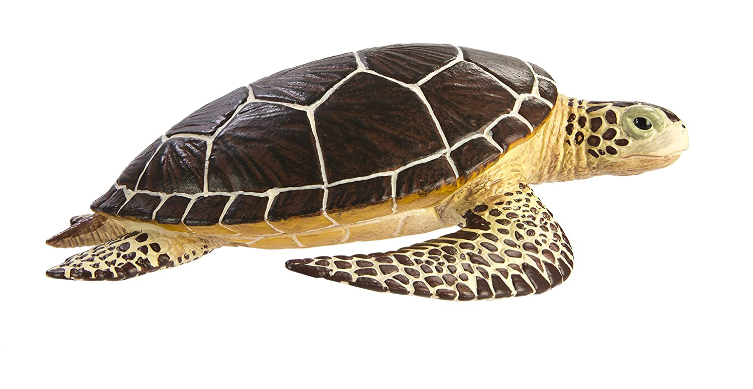 The Complete Alligator Snapping Turtle Care Guide