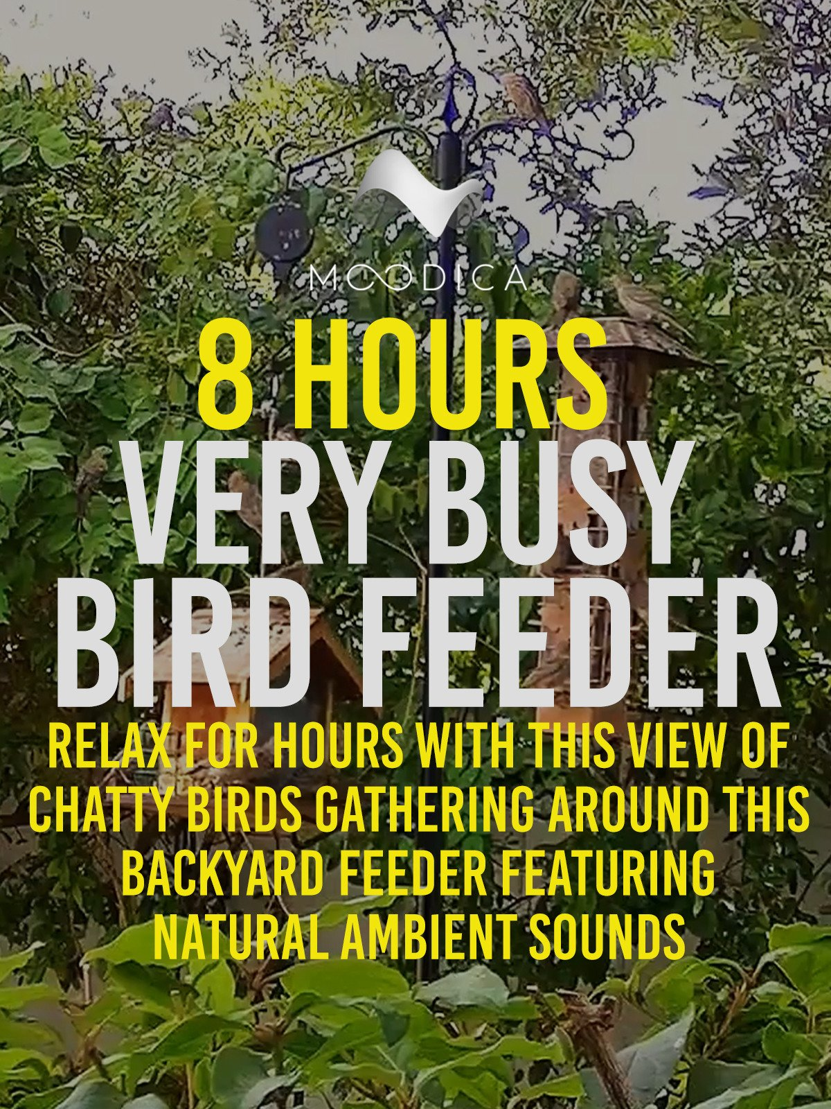 8 Hours: Very Busy Bird Feeder: Relax For Hours With This View of Chatty Birds Gathering Around This Backyard Feeder Featuring Natural Ambient Sounds