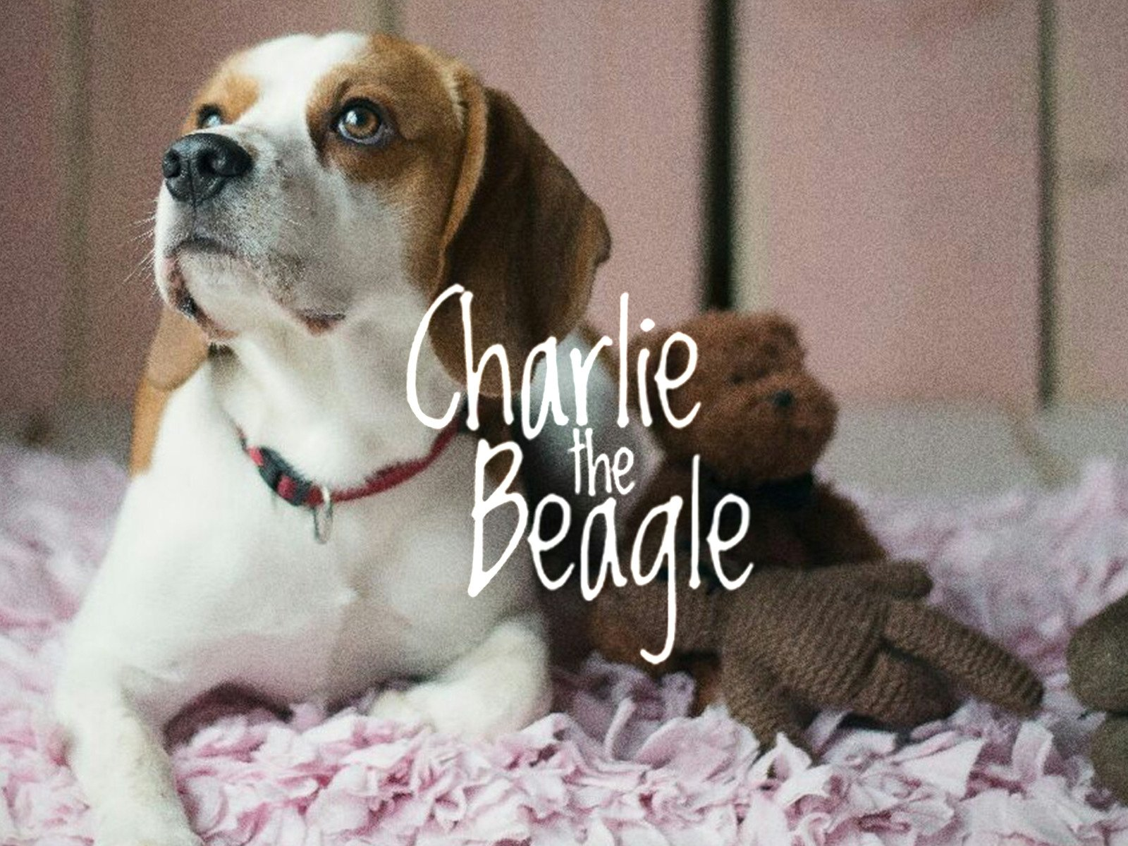 Charlie The Beagle - Season 1