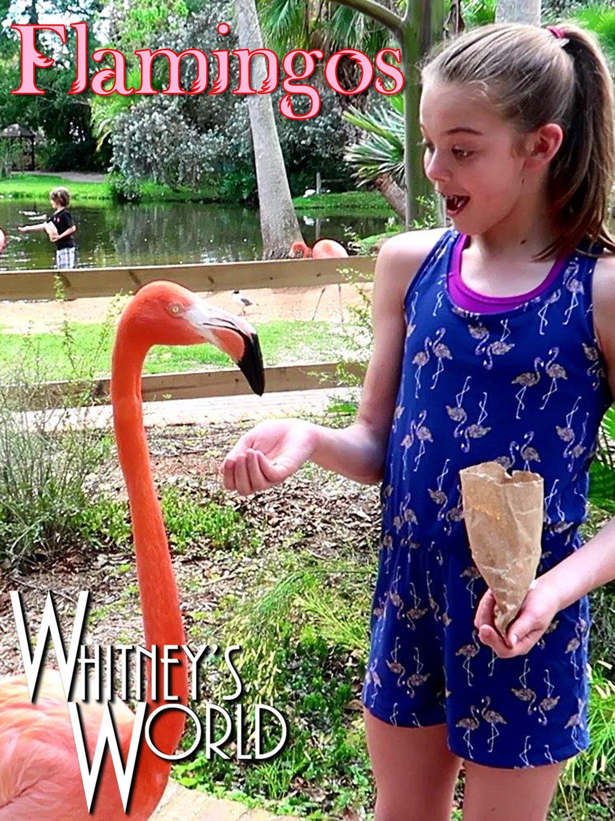 Flamingos on Amazon Prime Video UK