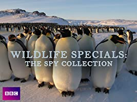 Wildlife Specials: The Spy Collection Season 1