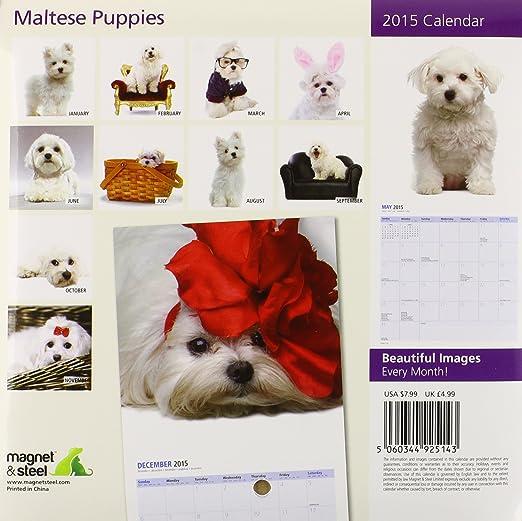kalender 2015 malteser welpen minikalender magnet amp steel. Black Bedroom Furniture Sets. Home Design Ideas