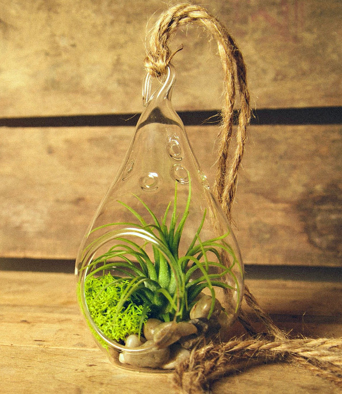 Air Plant Tillandsia Bromeliads Kit Teardrop Terrarium with Pebbles and Moss Great Little Houseplant