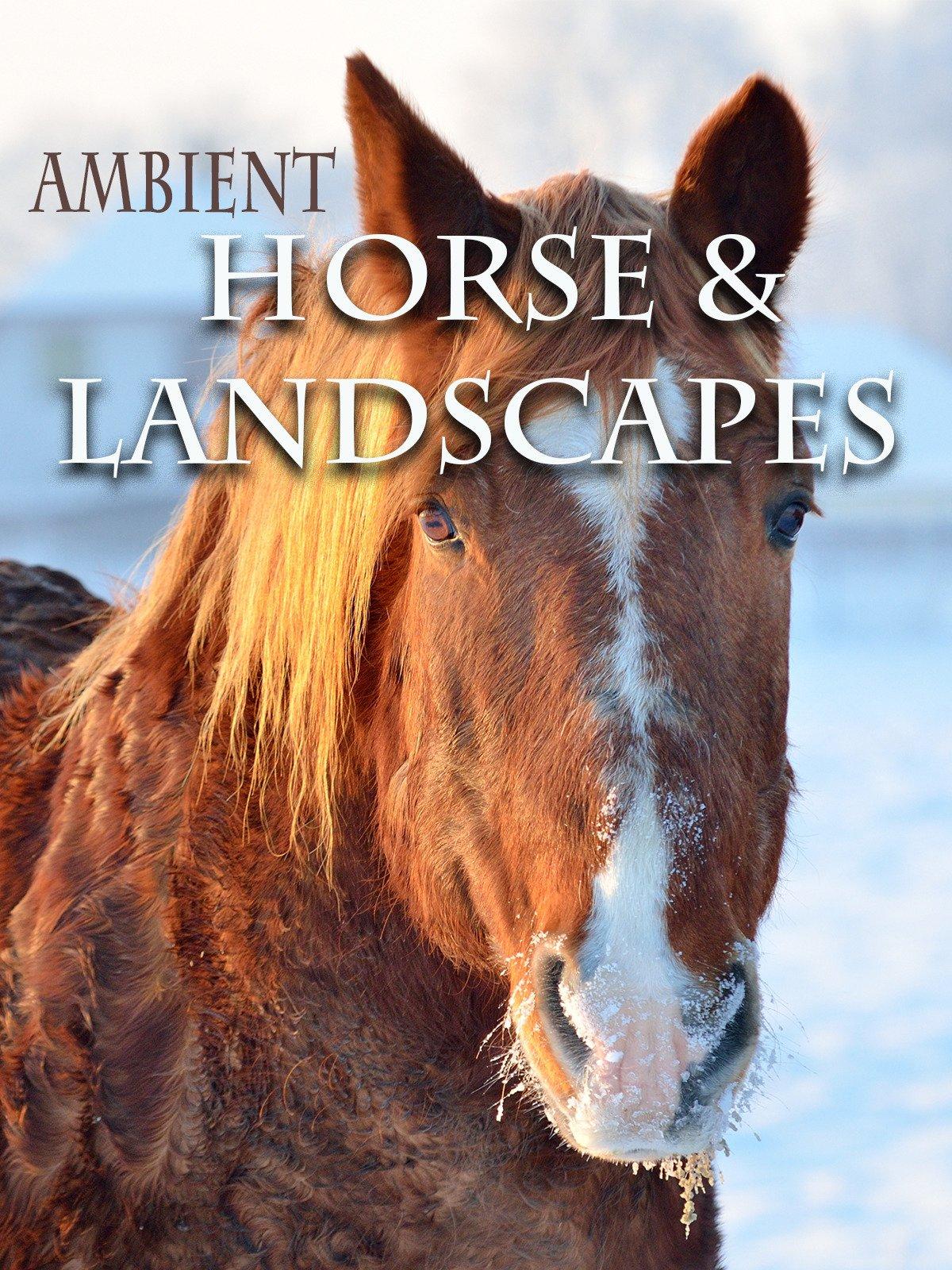 Ambient Horse & Landscapes