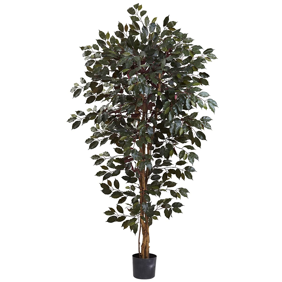 Nearly Natural 5436 Capensia Ficus Tree, 6-Feet