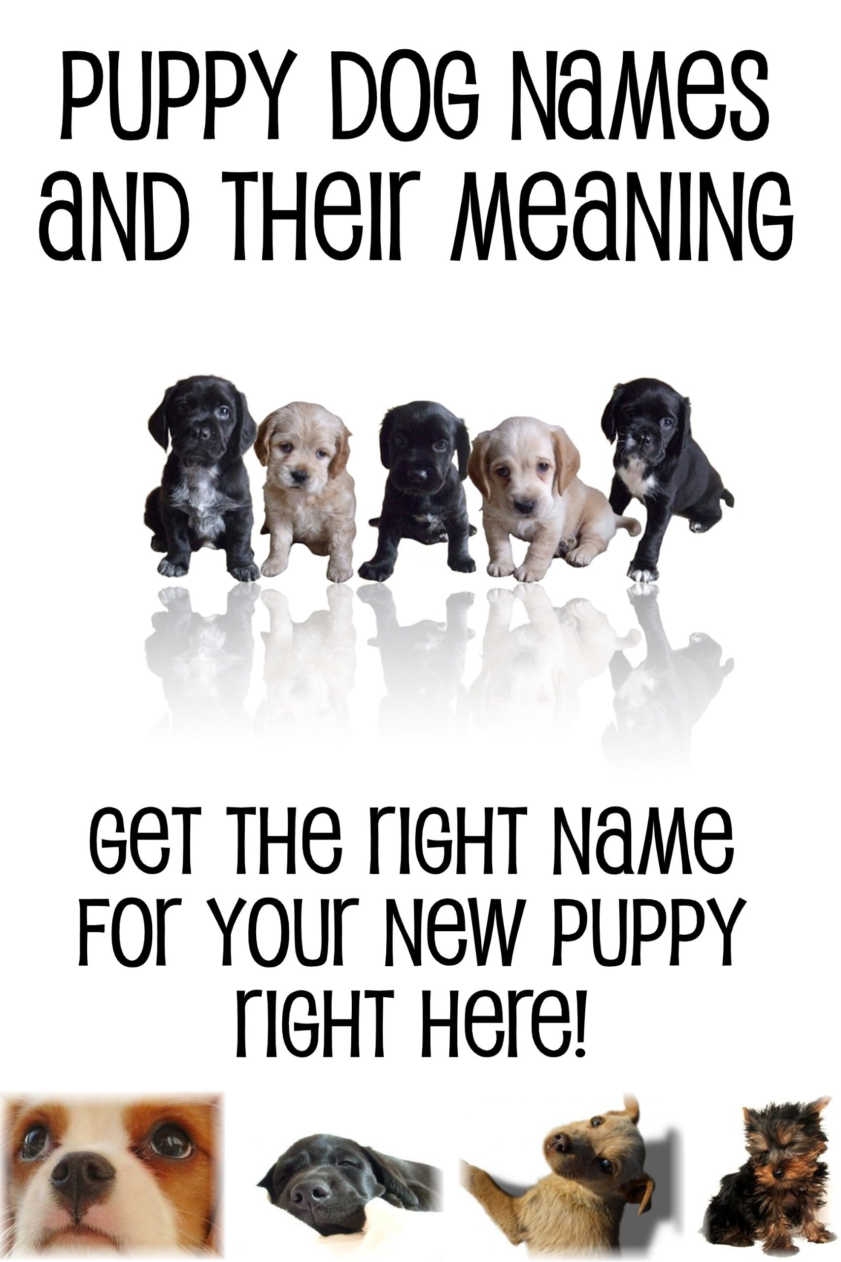 PUPPY DOG NAMES AND TH...