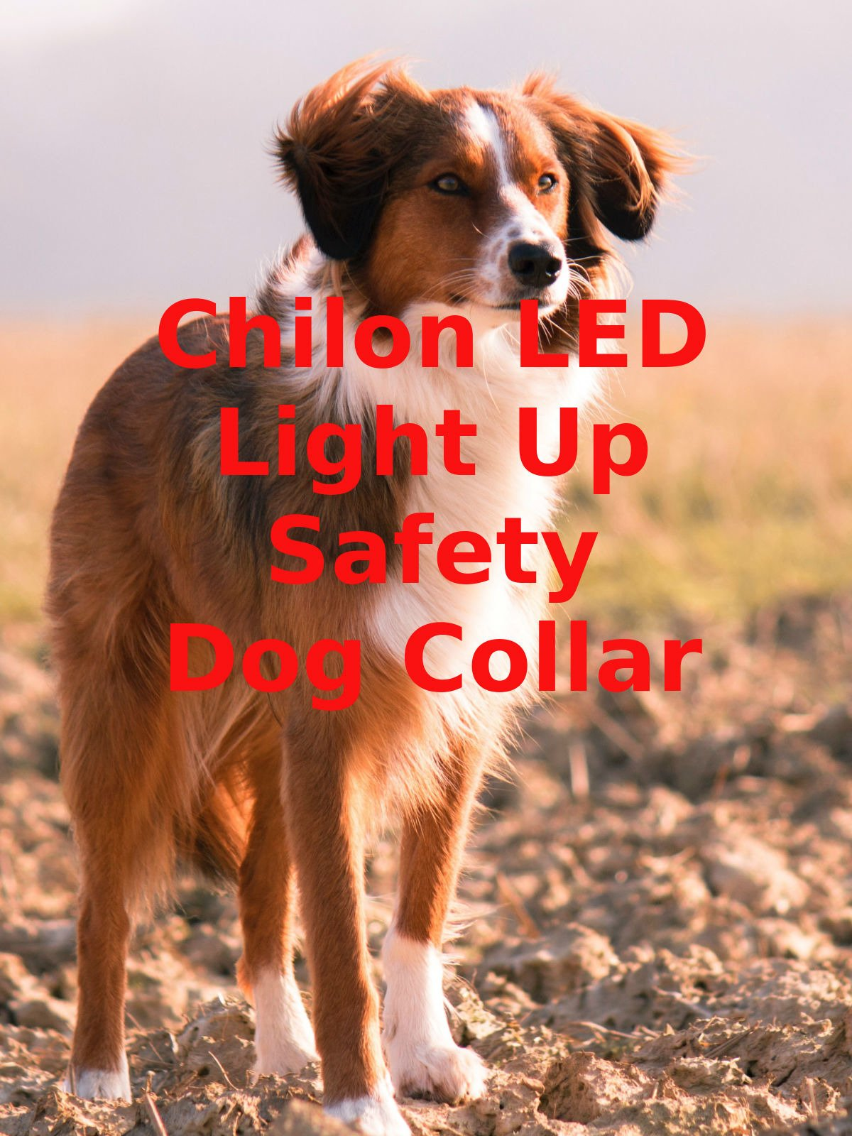 Review: Chilon LED Light Up Safety Dog Collar on Amazon Prime Video UK