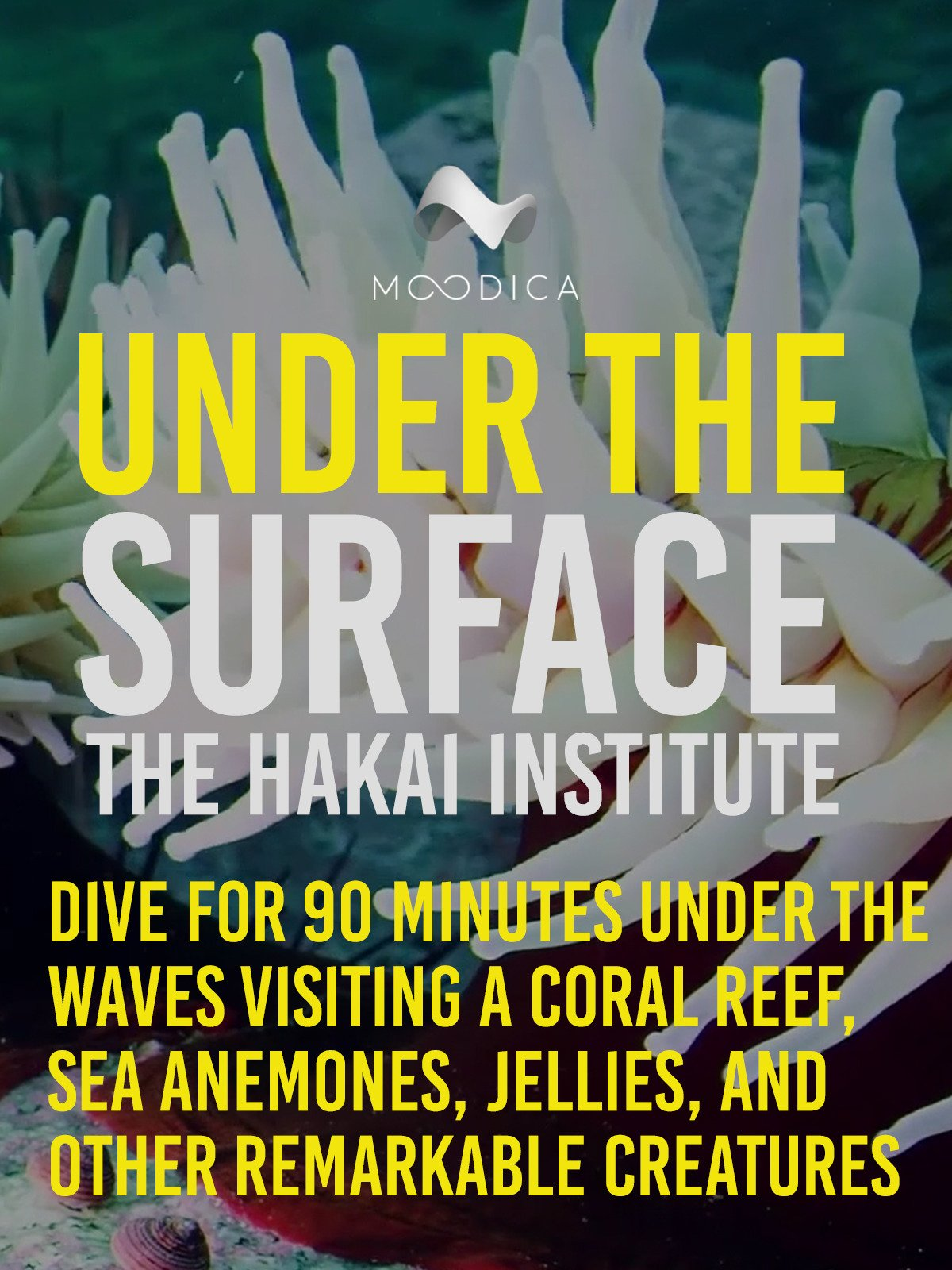 Under The Surface: The Hakai Institute: Dive For 90 Minutes Under the Waves Visiting A Coral Reef, Sea Anemones, Jellies, and Other Remarkable Creatures