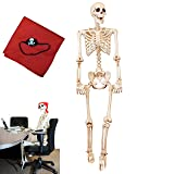 5 ft Pose-N-Stay Life Size Skeleton Full Body Realistic Human Bones with Posable Joints for Halloween Pose Skeleton Prop Decoration (Color: White)