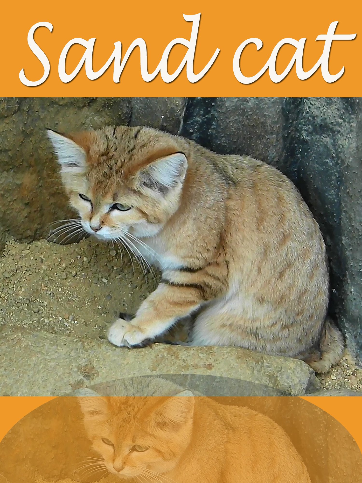 Clip: Sand cat on Amazon Prime Instant Video UK