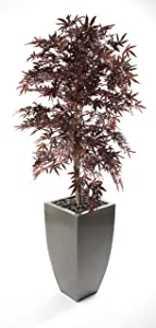 Closer to Nature Artificial 5ft 6  Brown Japanese Maple Tree   Artificial Silk Plant and Artificial Tree Range       Customer review