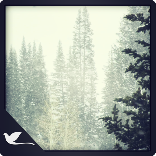 Snowy Pine Trees (Slow Mo App compare prices)