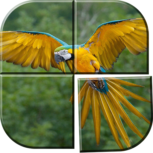 vogel spiele 3d