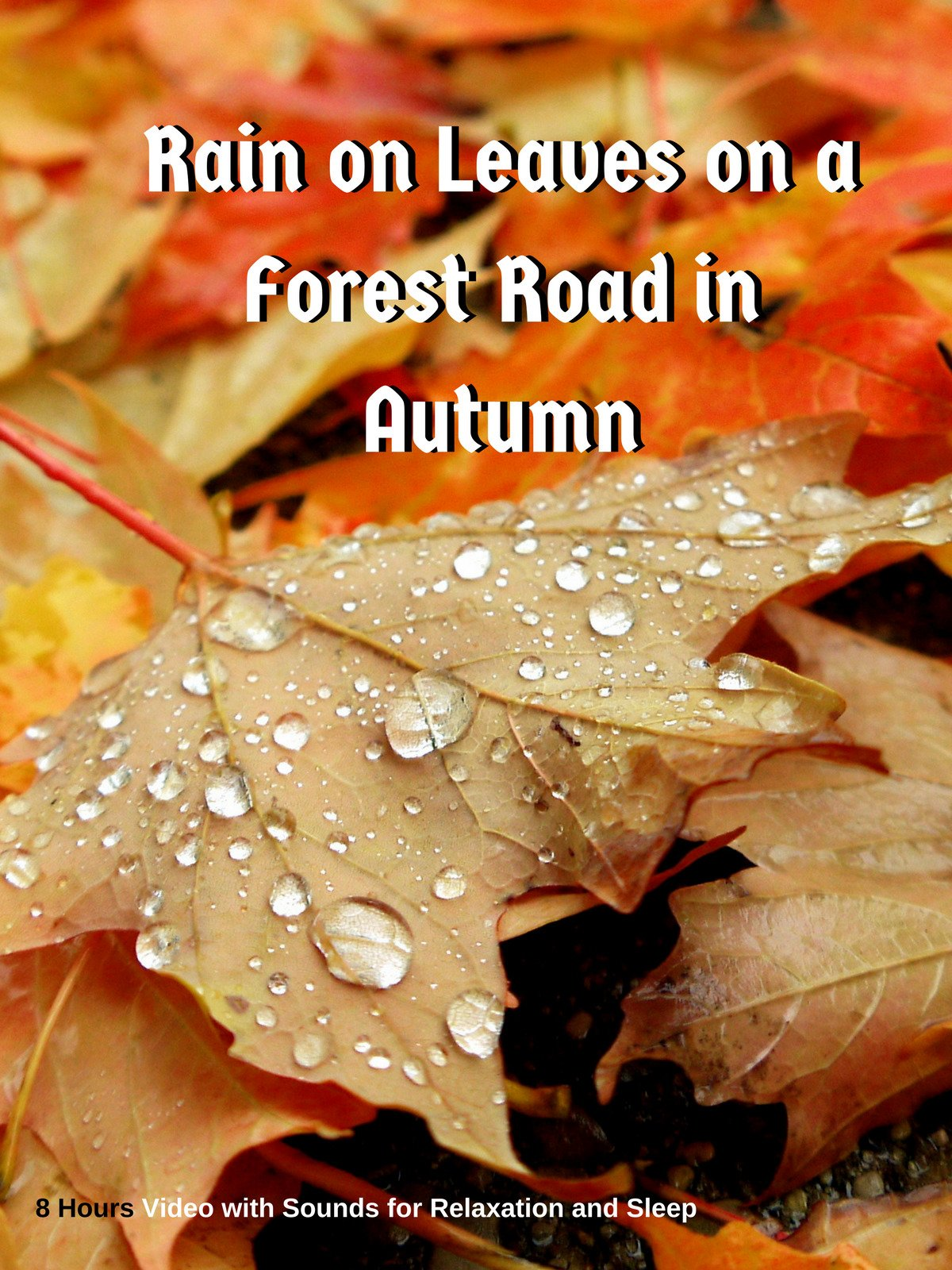 Rain on Leaves on a Forest Road in Autumn