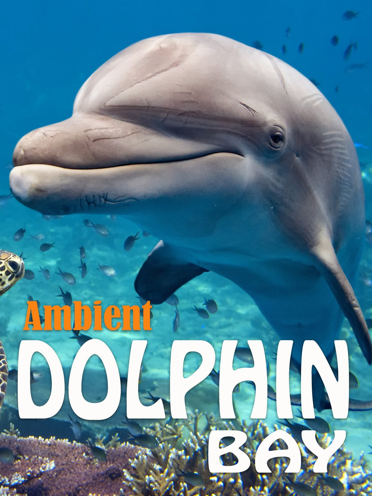 Ambient Dolphin Bay