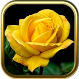 More Rose Jigsaw Puzzle Games