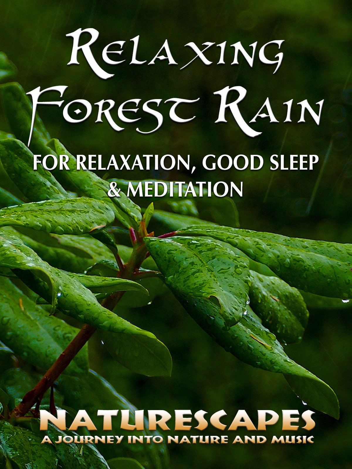 Relaxing Forest Rain for Relaxation, Sleep & Meditation