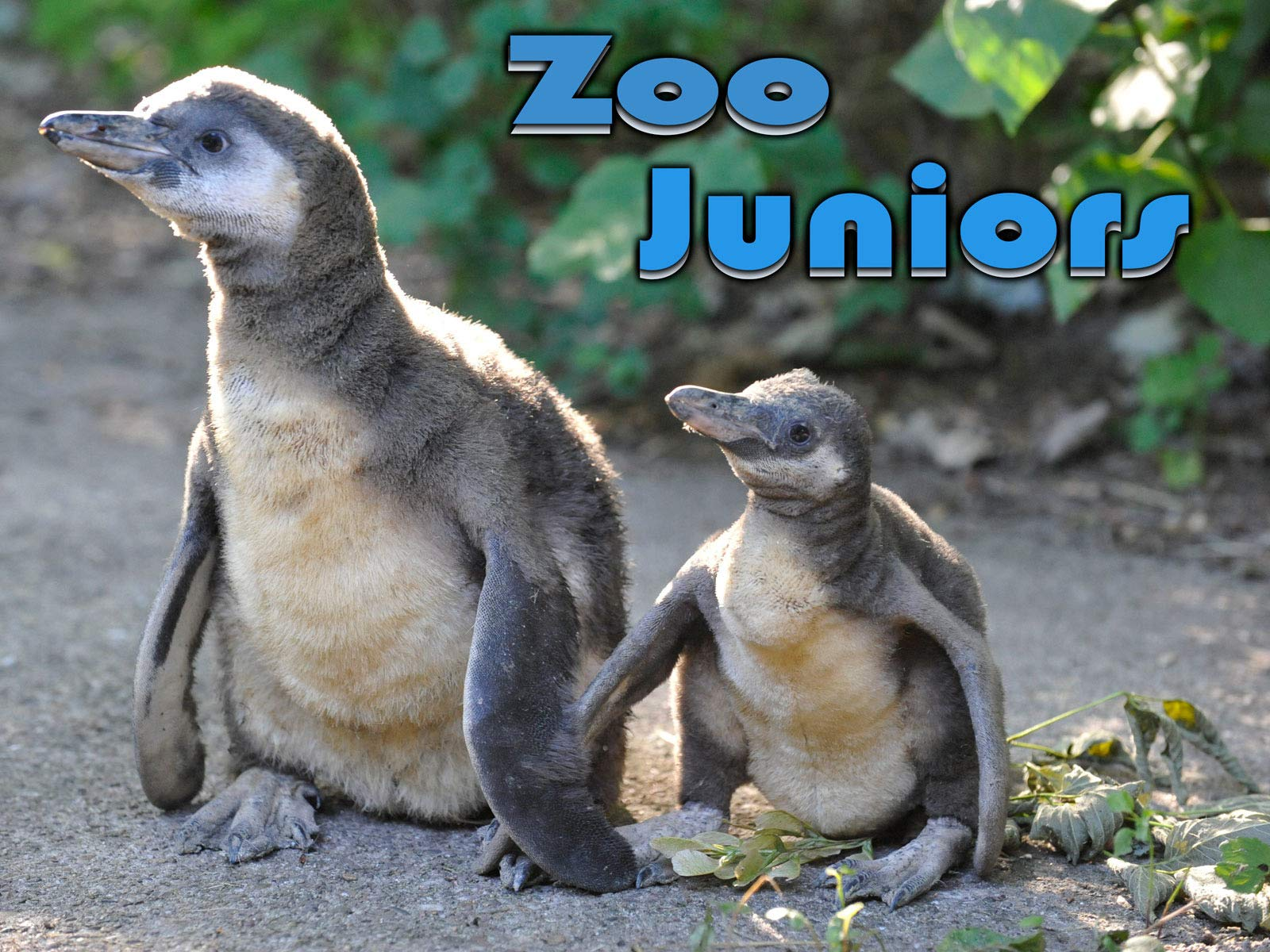 Zoo Juniors S2 on Amazon Prime Video UK
