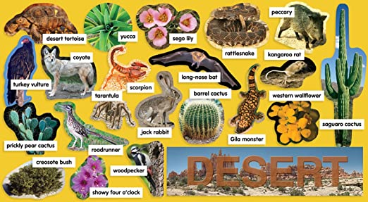 deserts animals and plants - photo #26