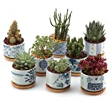 T4U 3 Inch Ceramic Japanese Style Serial succulent Plant Pot/Cactus Plant Pot Flower Pot/Container/Planter Full colors Package 1 Pack of 8 (Color: Japan, Tamaño: XS/M)