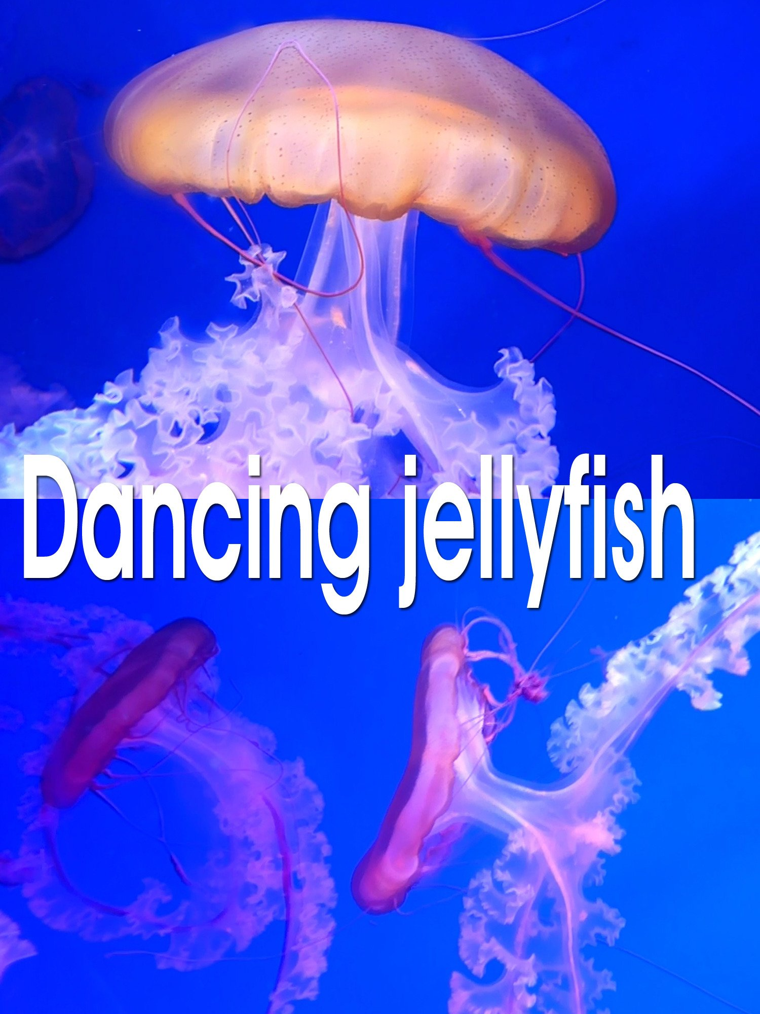 Clip: Dancing jellyfish on Amazon Prime Instant Video UK