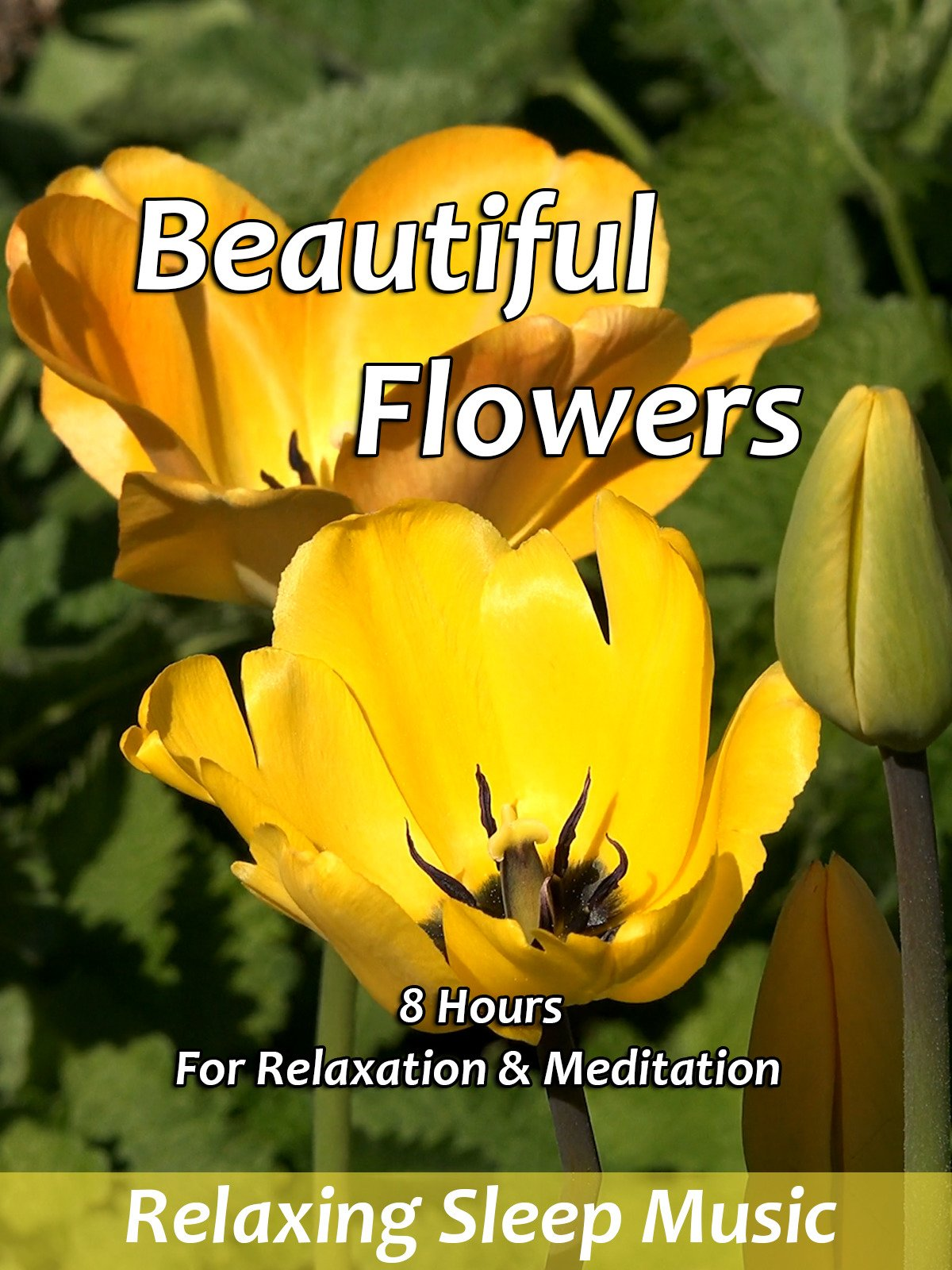 Beautiful Flowers for Relaxation & Meditation