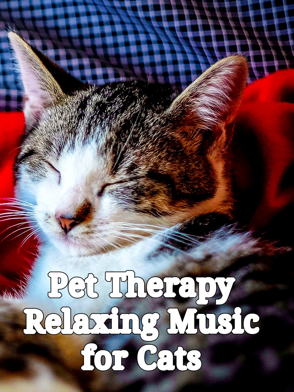 Pet Therapy: Relaxing Music for Cats