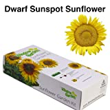 Garden Starter Kit (Dwarf Sunspot Sunflower) – Grow sun flower seed in a mini greenhouse, then plant a beautiful patch of Sunflowers in your yard. It's easy, fun, and a great gift for adults and kids (Color: Dwarf Sunspot)