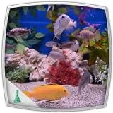 Life in Aquarium