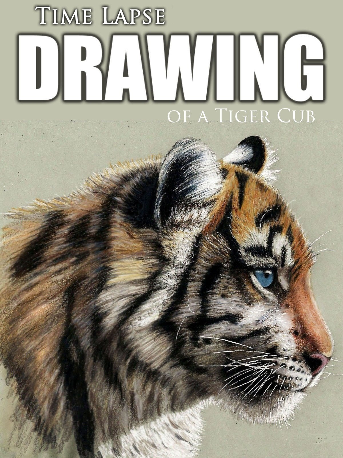Clip: Time Lapse Drawing of a Tiger Cub