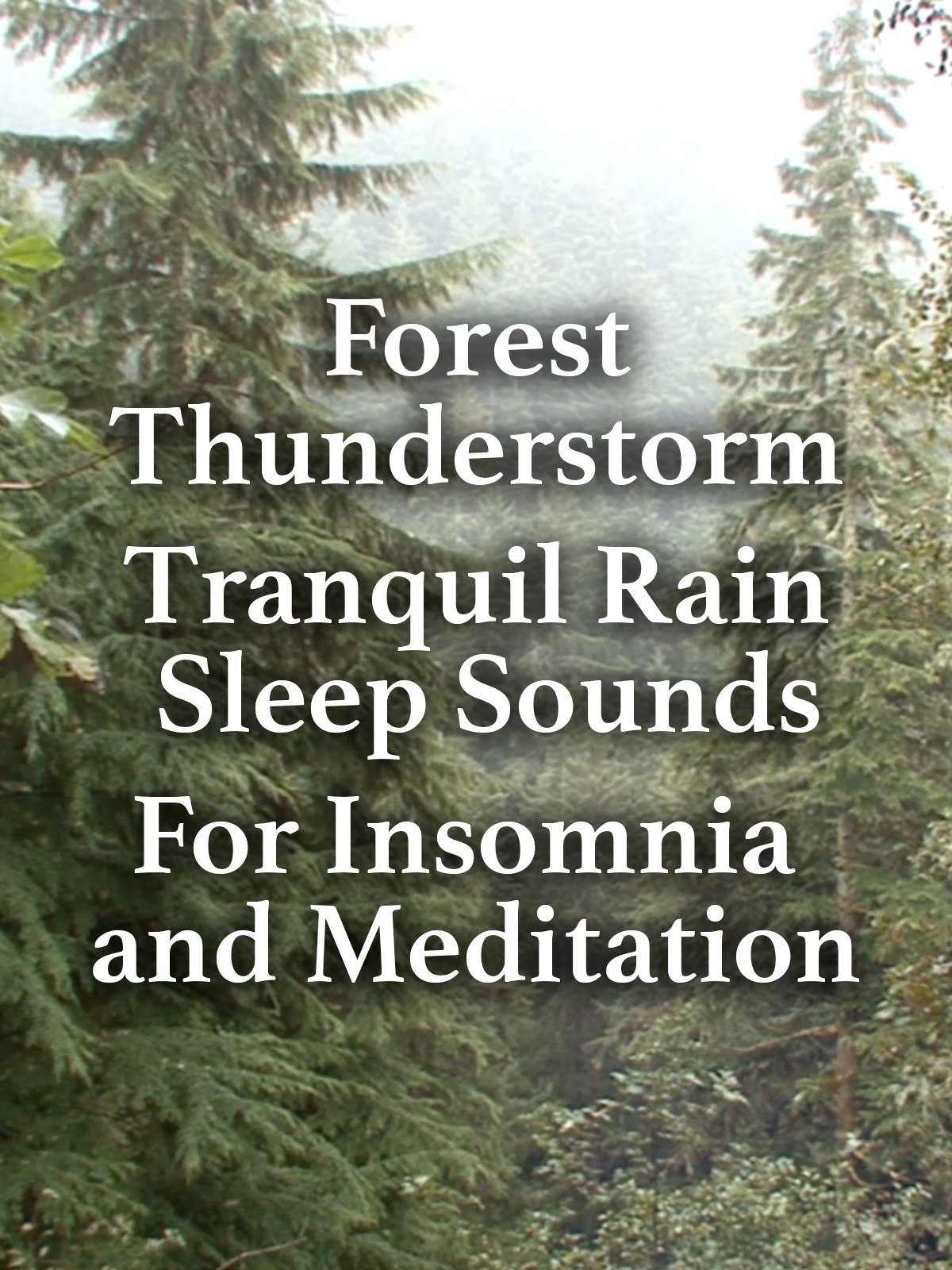 Watch 'Forest Thunderstorm Tranquil Rain Sleep Sounds for