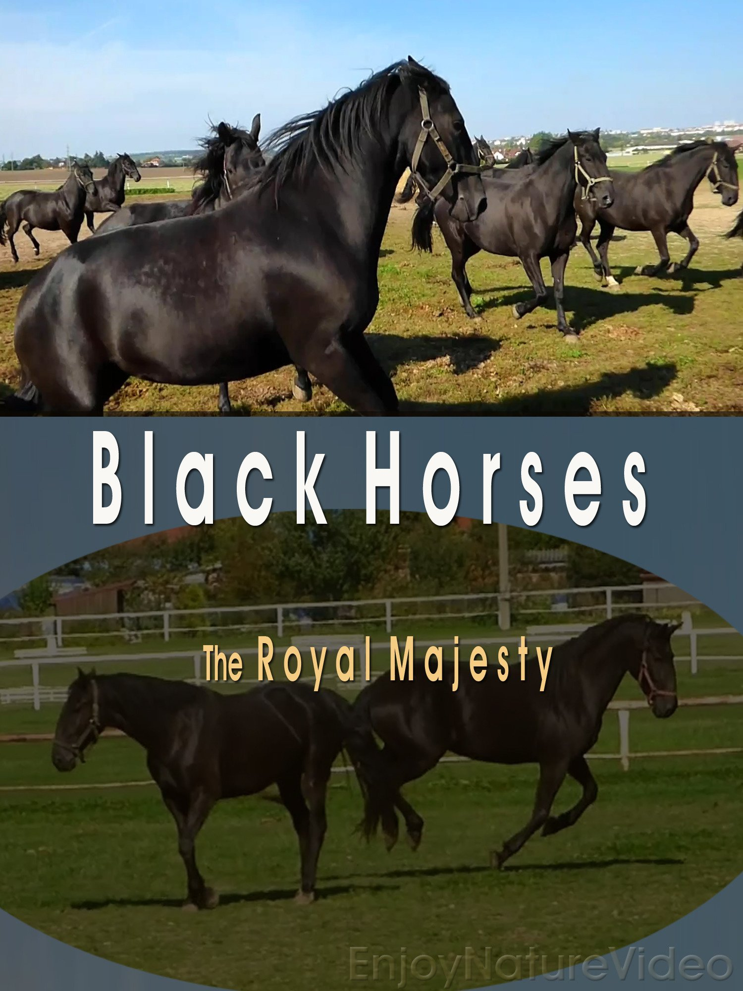 Black Horses. The Royal Majesty