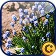 Garden Plants Free