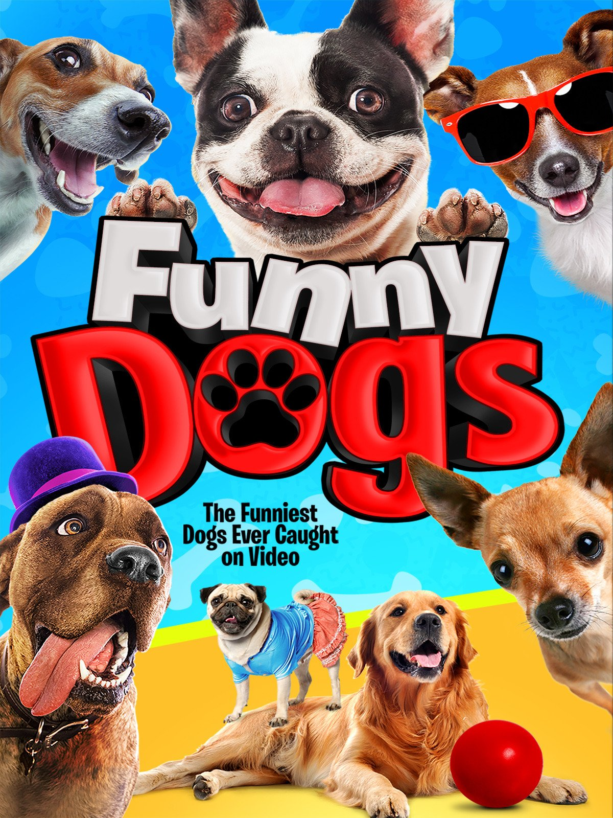 Funny Dogs on Amazon Prime Instant Video UK