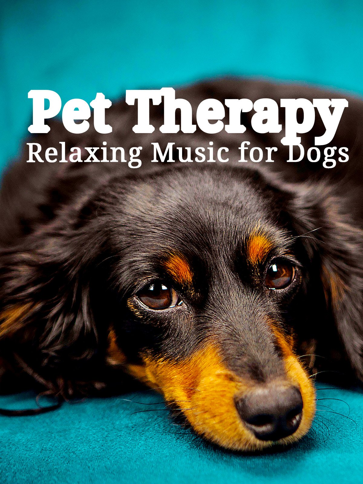 Pet Therapy: Relaxing Music for Dogs